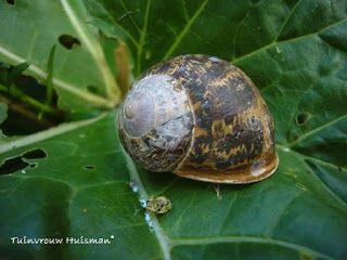 Goedkoop Tuin Aanleggen : Diy ideeën voor je tuin ik woon fijn