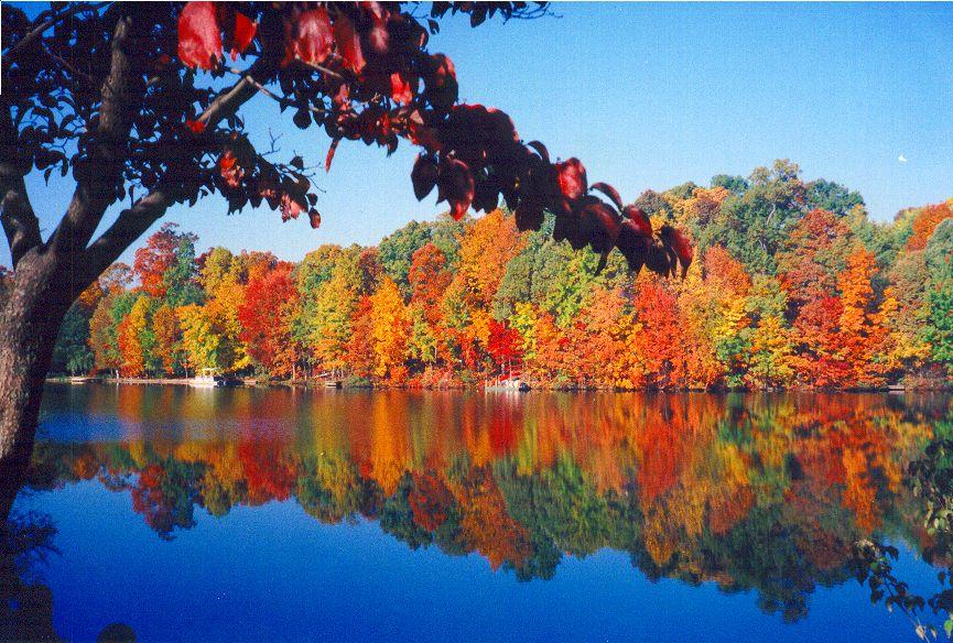 Fall On Lake Thoreau Reston Virginia Around Town