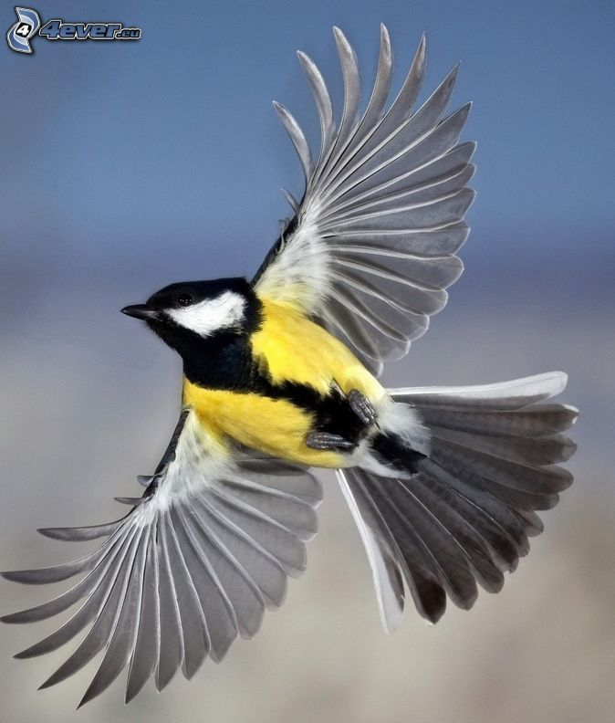 Pin Von Carmen Petry Auf Blaumeise Im Vogelhaus Vogel Im Flug Meise Vogel Malvorlagen