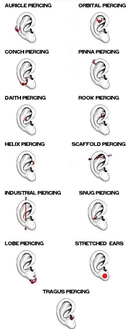 the ear allows us to have a selection of sick piercings at
