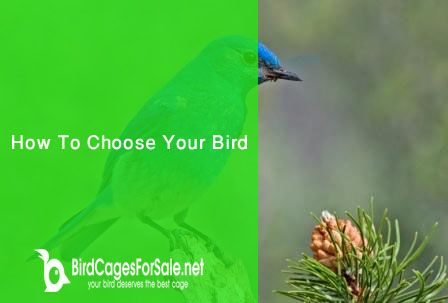 How To Choose Your Bird