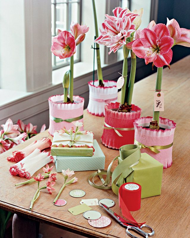 Potted Amaryllis Gift Wrap Crepe paper, Wraps and Gift