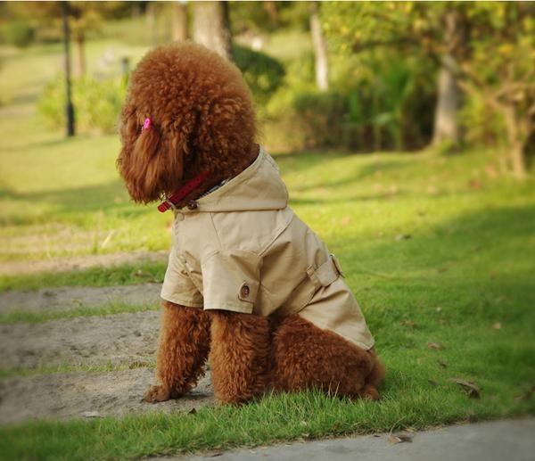 Spring Dog Jackets