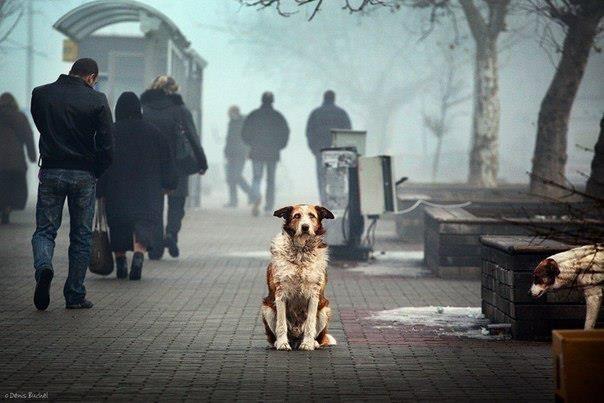 sad dog waits for owner