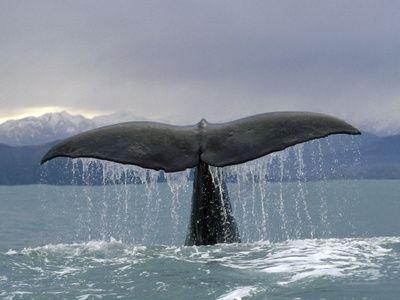 Global warming sperm whale
