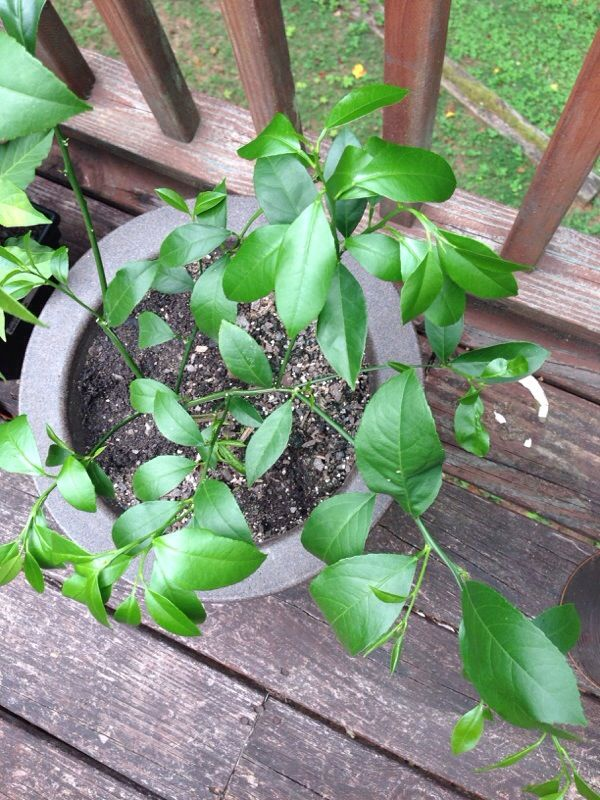 Free Plant Identification Potted trees, Types of soil