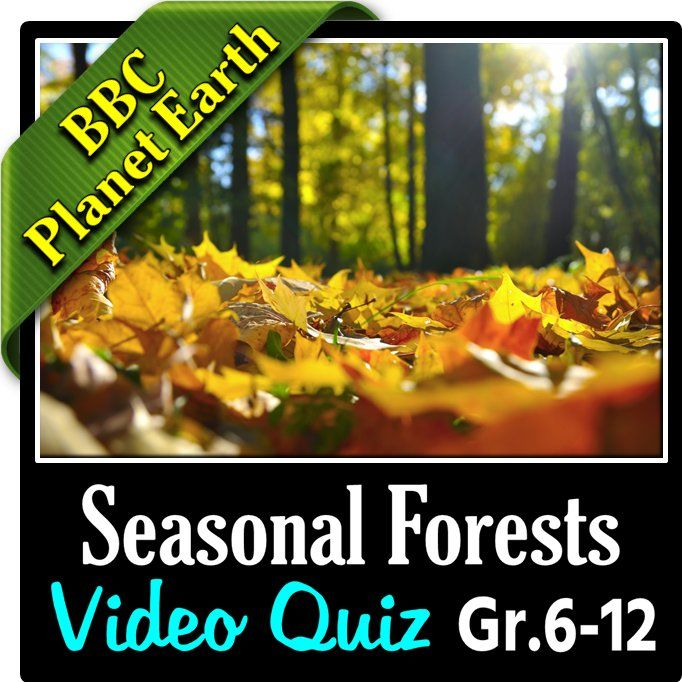 planet earth seasonal forests video quiz editable students. Black Bedroom Furniture Sets. Home Design Ideas
