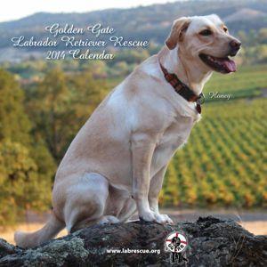 Calendar Labrador Retriever Rescue Labrador Retriever Retriever