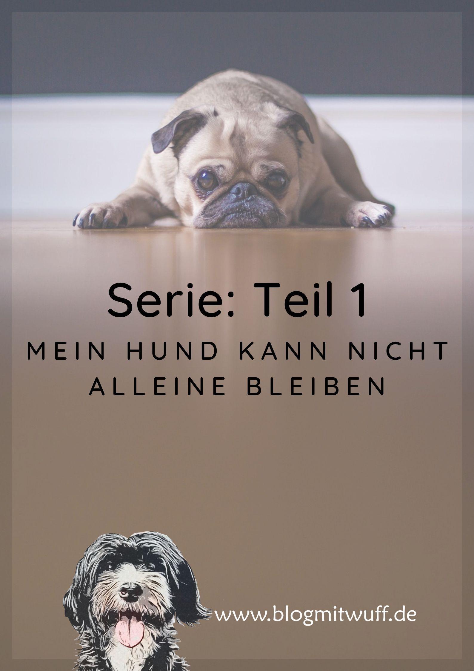 Serie Mein Hund Kann Nicht Alleine Bleiben Hunde Aufgeregter