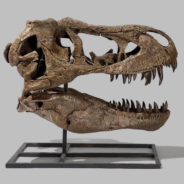 Tyrannosaurus Rex Dinosaur Skull Cast Tyrannosaurus Rex Tyrannosaurus Rex