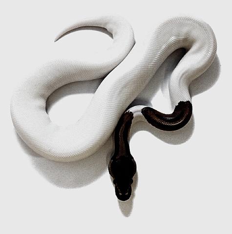 slither   B&N   Pinterest   Serpientes, Blanco negro y Fotografias ...