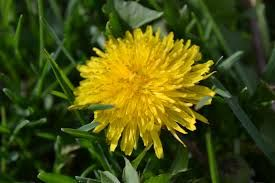 weed identification - Google Search