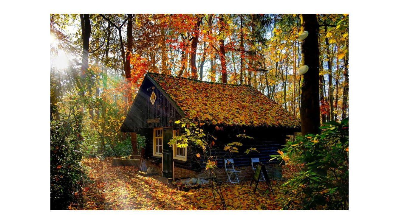 Una cabaña en un bosque.
