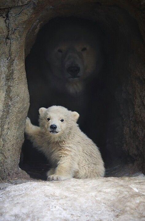 Que lindo oso