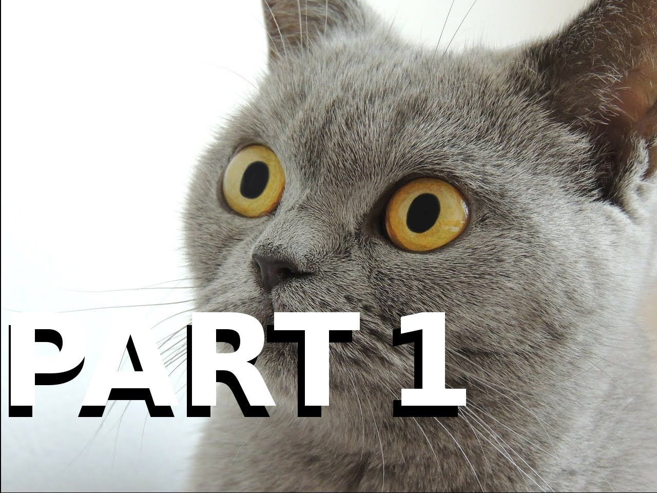Funny Cats Compilation 2015! [PART1] [½h HD *1080p*] Funny