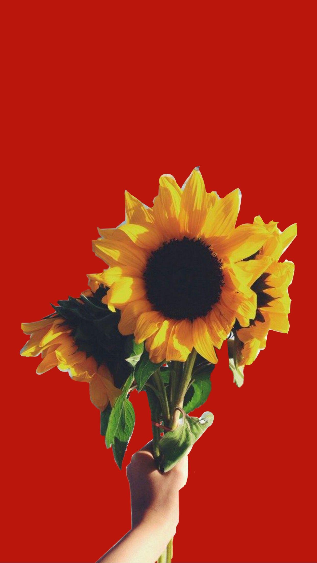 Red Lockscreen Wallpaper Background Sunflower Aesthetic Sunflower Wallpaper Lock Screen Backgrounds Sunflower Iphone Wallpaper