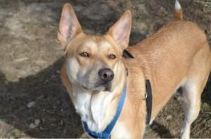 Adopt Jewel Adopted On Dog Love Pets Dogs