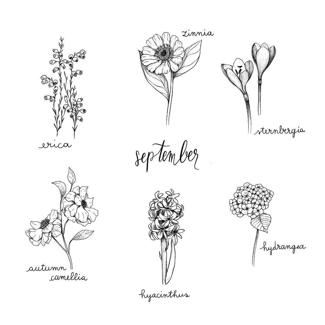 Alice On Instagram 6 September Flowers Some Flowers You Could Find In Italy In September Eri In 2020 Aster Flower Tattoos September Flowers Flower Drawing