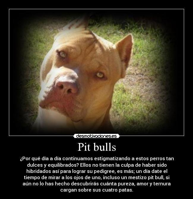 Frases Inteligentes Sobre Perros Buscar Con Google Perros
