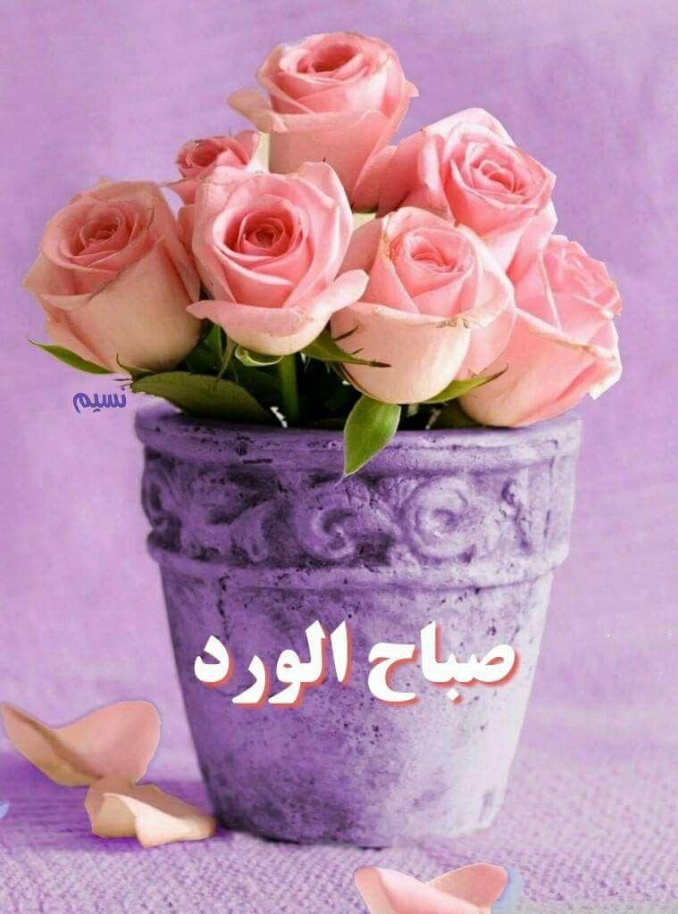 كن جميلا ترى الوجود جميلا اللهم ارزقنا جمال القلوب وافتح لنا مع هذا الصباح دروب الخير والسعادة وحق لنا ولأ حبابنا ما نتمنا Beautiful Flowers Flowers Rose