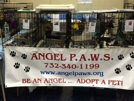 Angel PAWS cat rescue will be featured at Central Jersey