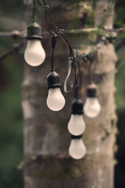 Light Bulbs | by Joseph W. Nienstedt