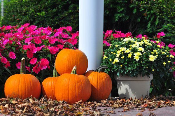 SunPatiens provide spectacular color in fall SunPatiens