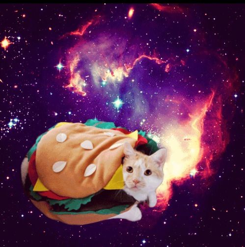 3/9 of cats in space