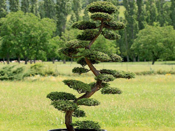 Des arbres aux formes travaillées et étudiées, qui n\'en n\'a jamais ...