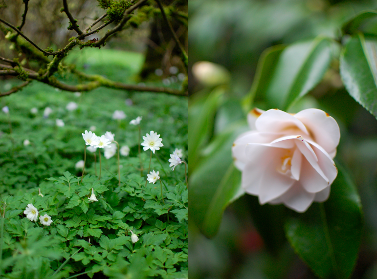 Pale pink flowers feel like Spring. Photos: Chelsea Fuss for Frolic!