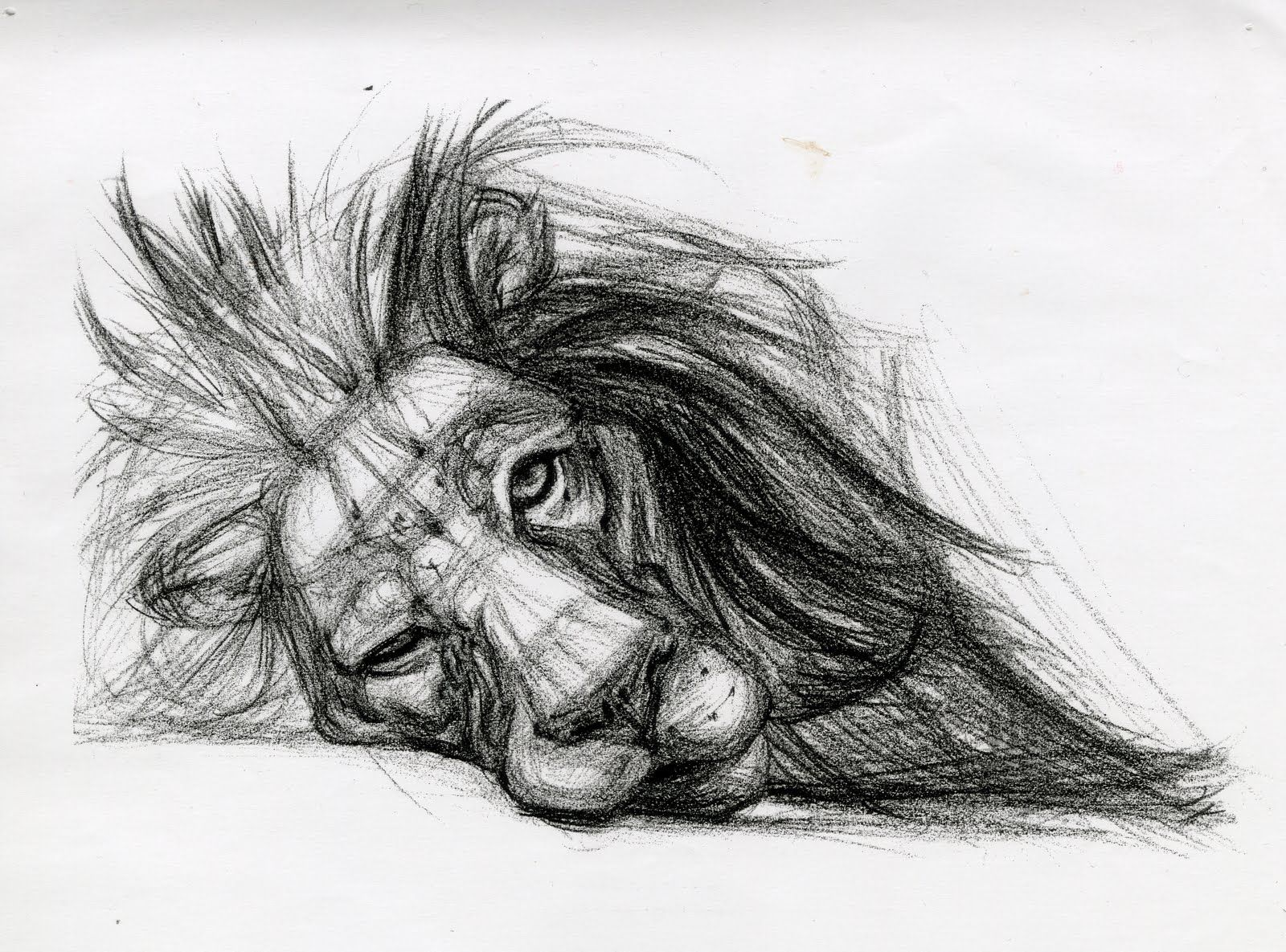Scribble Drawing Easy : From animal drawings by candace giancanelli