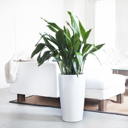 Indoor Plants Nyc Office And House Plant Delivery Service In New York