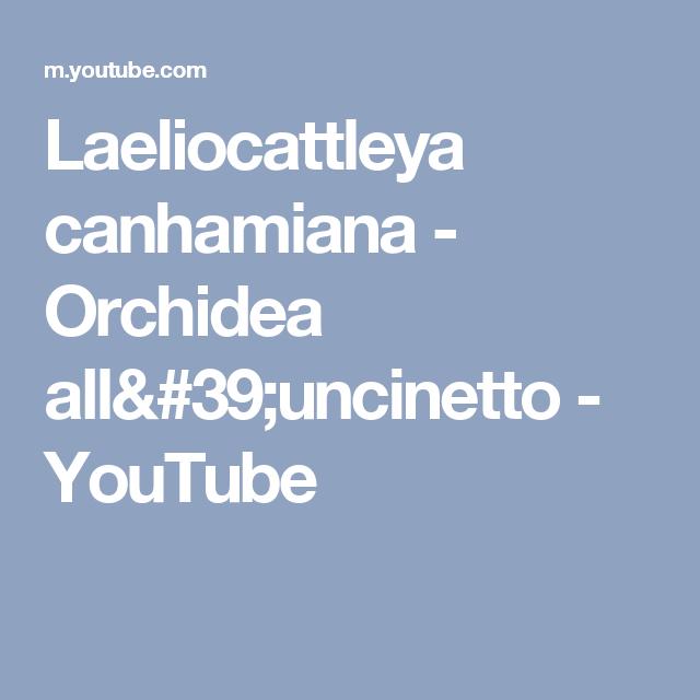 Laeliocattleya canhamiana - Orchidea  all'uncinetto - YouTube