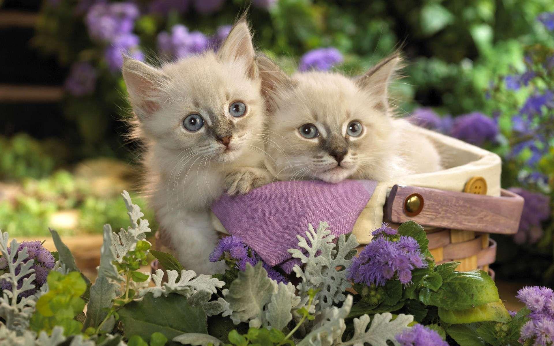 Fongoland Cute Kittens Fond D Ecran Mignon Chat Animaux Les Plus Mignons