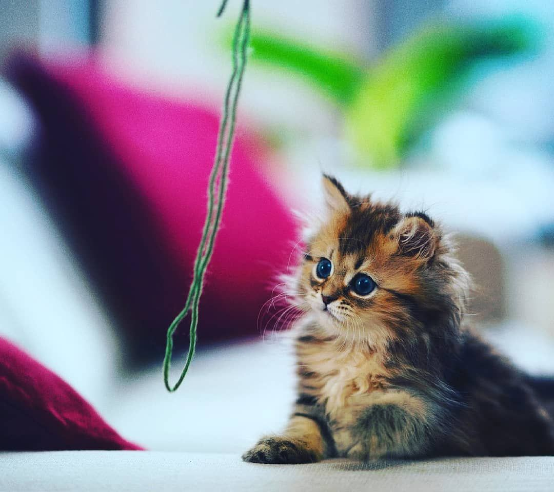 Awwwwwwwww What Is This Hanging Over There Seems Mysterious In 2020 Cat Heaven Cats Animals