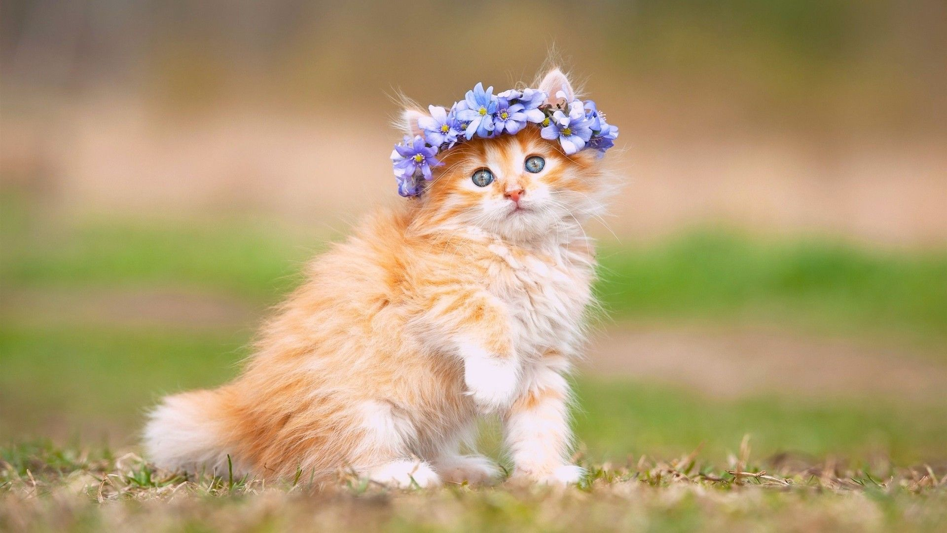 Fluffy Kitten Wallpapers High Quality Free Download Cats Kitten