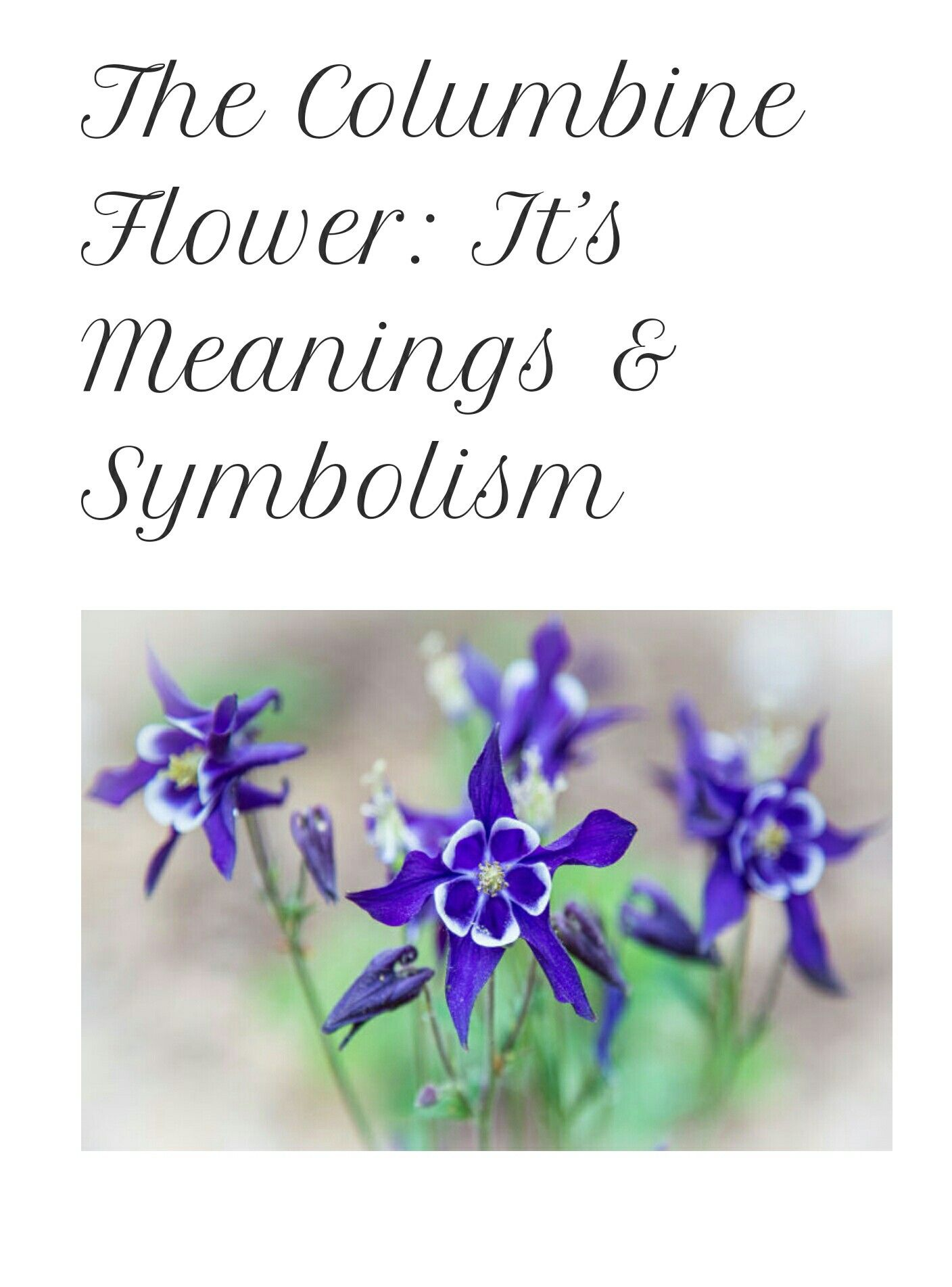 Pin By Jenny Mccarty On Tattoo Pinterest Columbine Flower And Tattoo