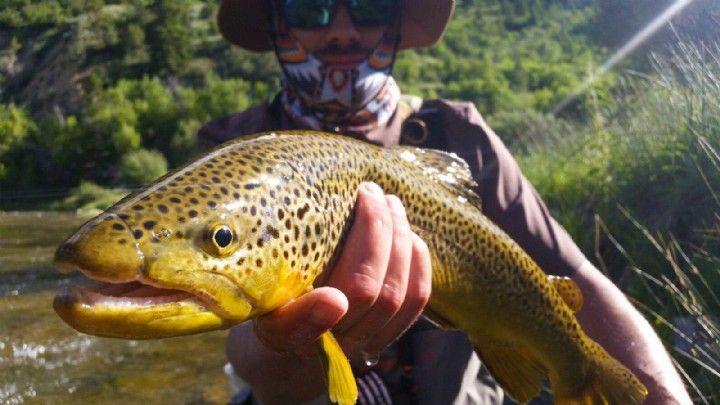 Green Drake Hatch In Northern Utah Jans Fishing Report Blog Jans Com Fly Fishing Flies Trout Fly Fishing Green Drake