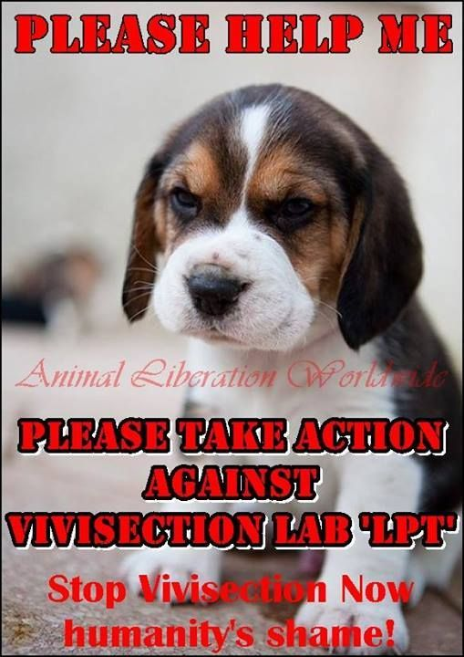 Stop Lab Testing On Animals No To Vivisection Animal Quotes