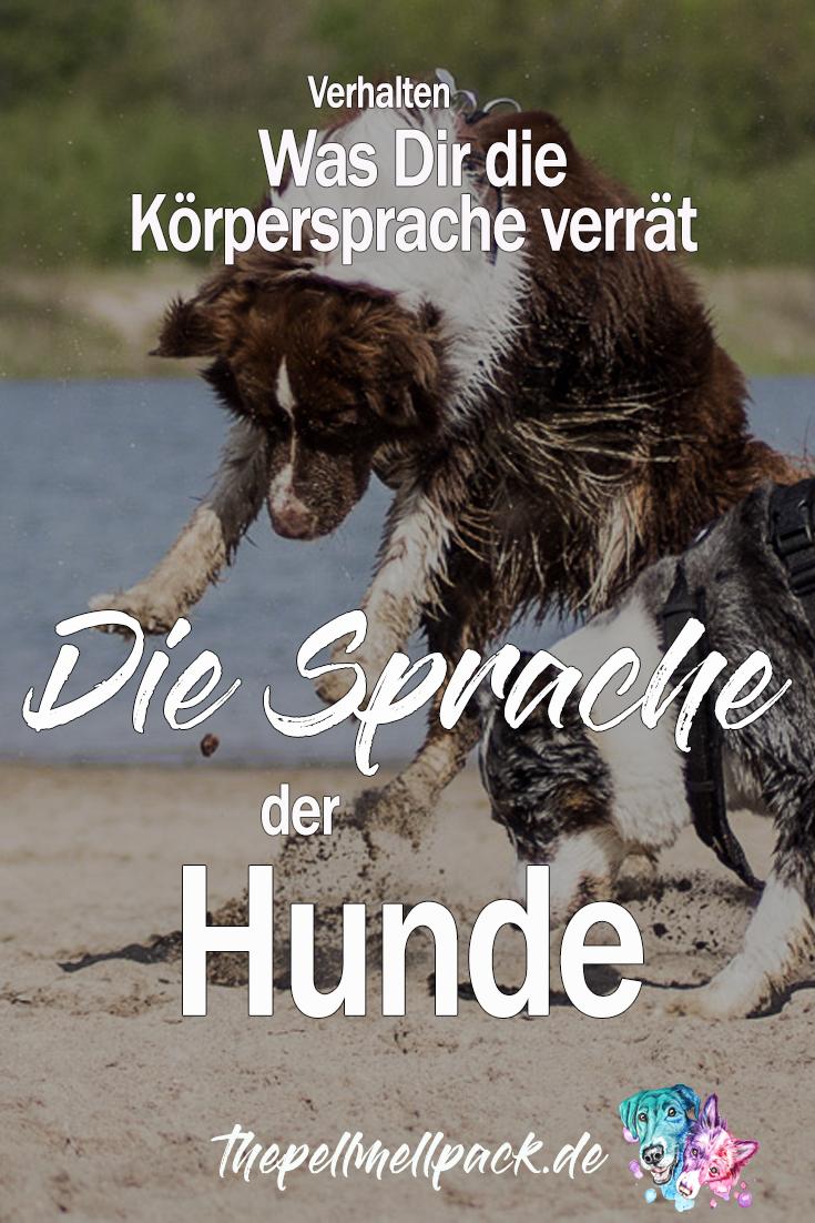 Appenzeller Sennenhund Charakter Wesen Pflege In 2020 Entlebucher Sennenhund Sennenhund Appenzeller Hund