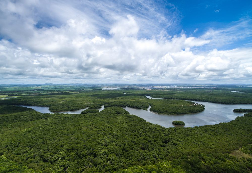 Why The Amazon Rainforest Could Be Devastated By The U S China