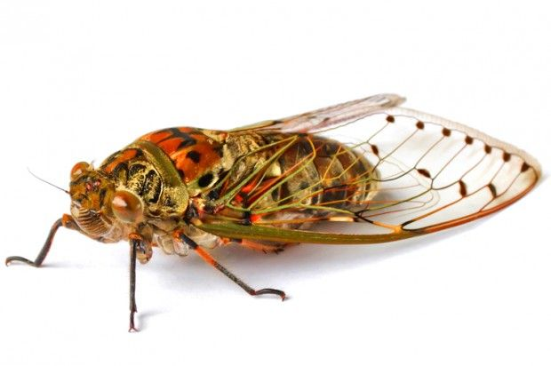 I'm terrified of the cicada onslaught