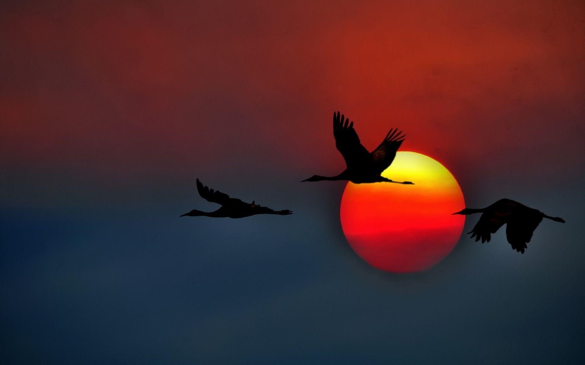 Pin By Lopusina Marijana On Nature With Images Crane Bird Birds Flying Bird Wallpaper