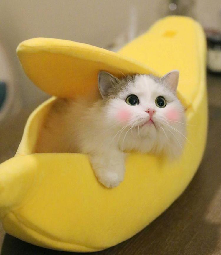 Banana boat take my baby home cats cute cats baby