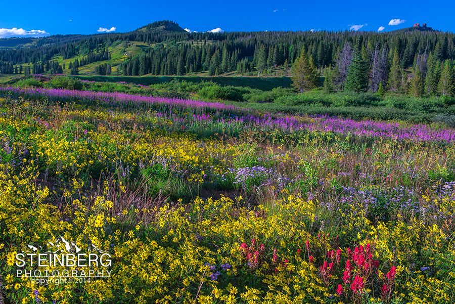 A floral fantasy covers the fields around Dumont Lake on