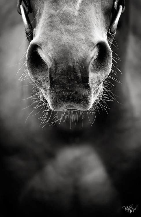 i always love a horses nose and lips yes it is wierd but they are so funny =]