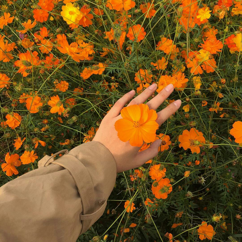 Flowers Orange And Hand Aes My Aesthetic