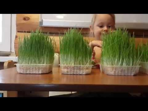 питательный раствор для проращивания семян