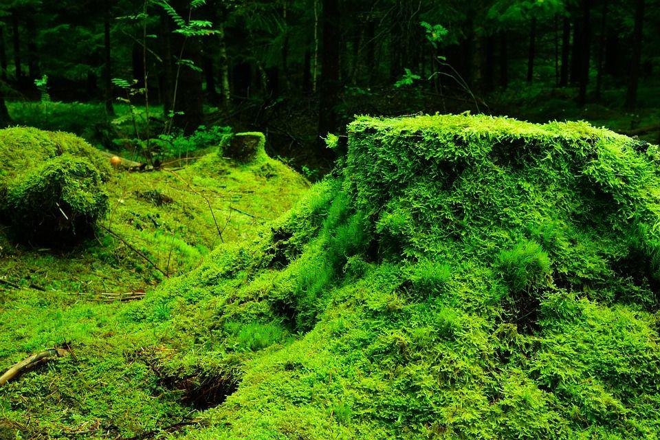Ilmainen kuva Pixabayssa - Forest, Moss, Norja