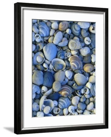 Shells of Freshwater Snails and Clams on Shore of Bear Lake, Utah, USA Photographic Print by Scott T. Smith #utahusa